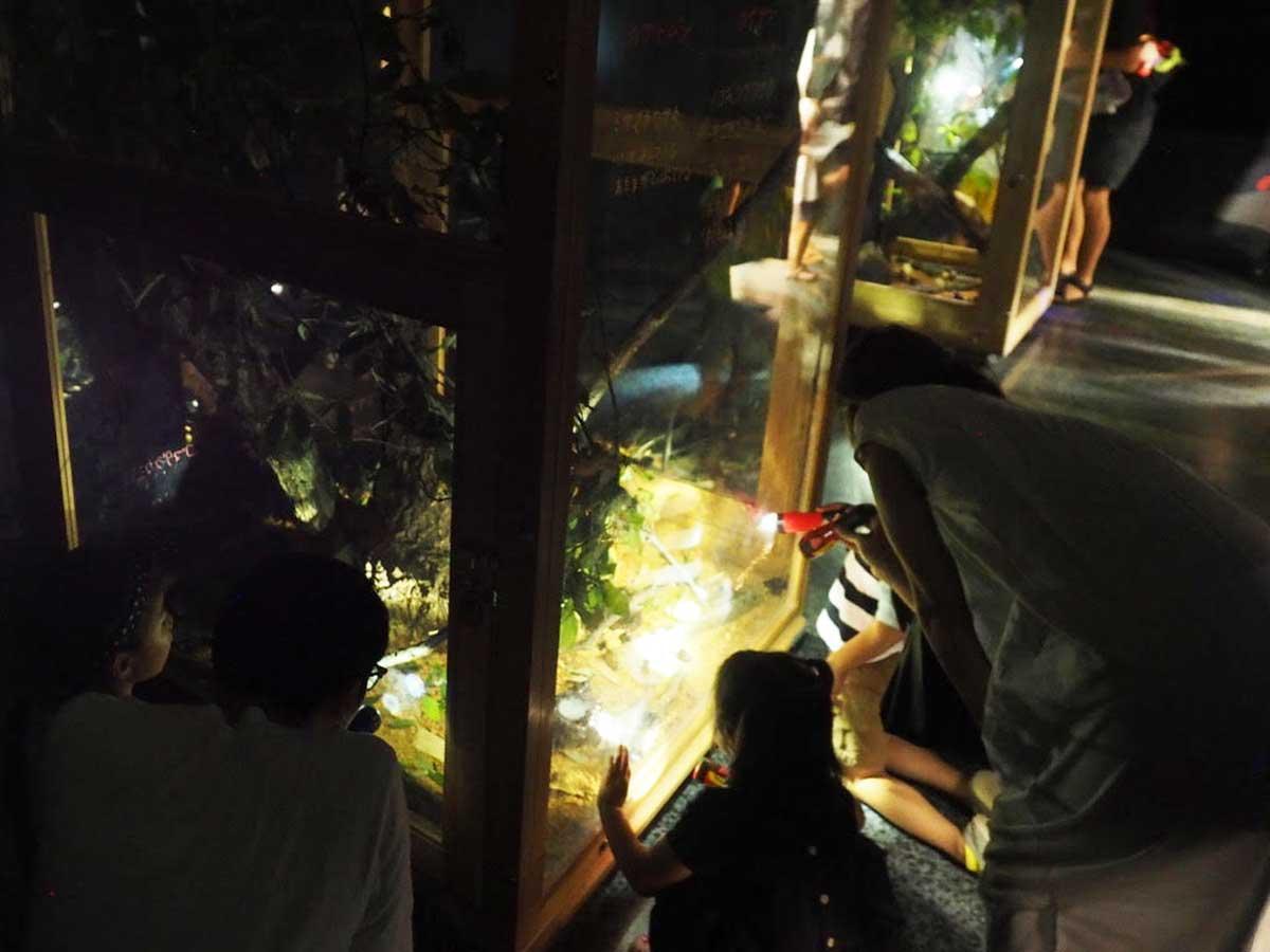 夜行性の昆虫を観察できる体験コーナー