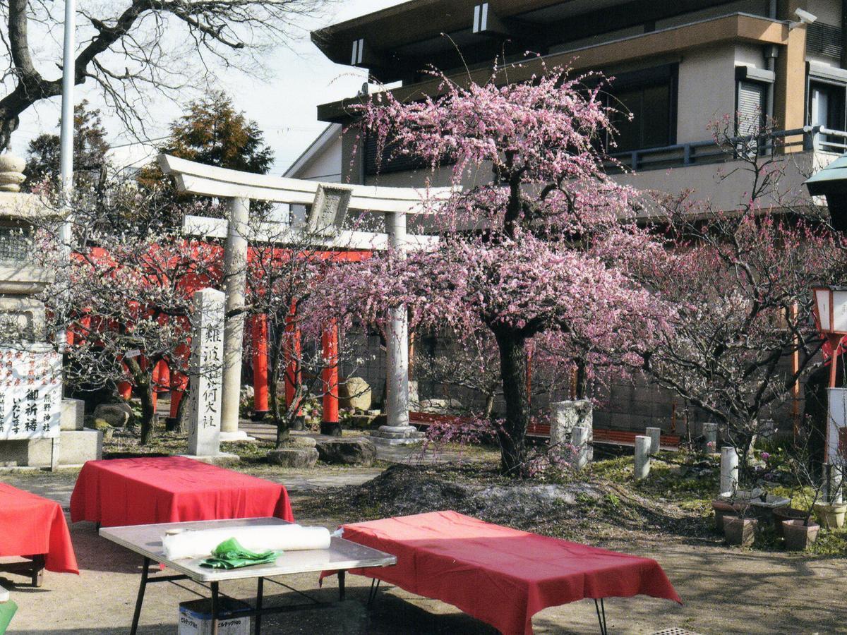 梅が咲き誇る境内。過去の様子。今年は開花がやや遅れているという