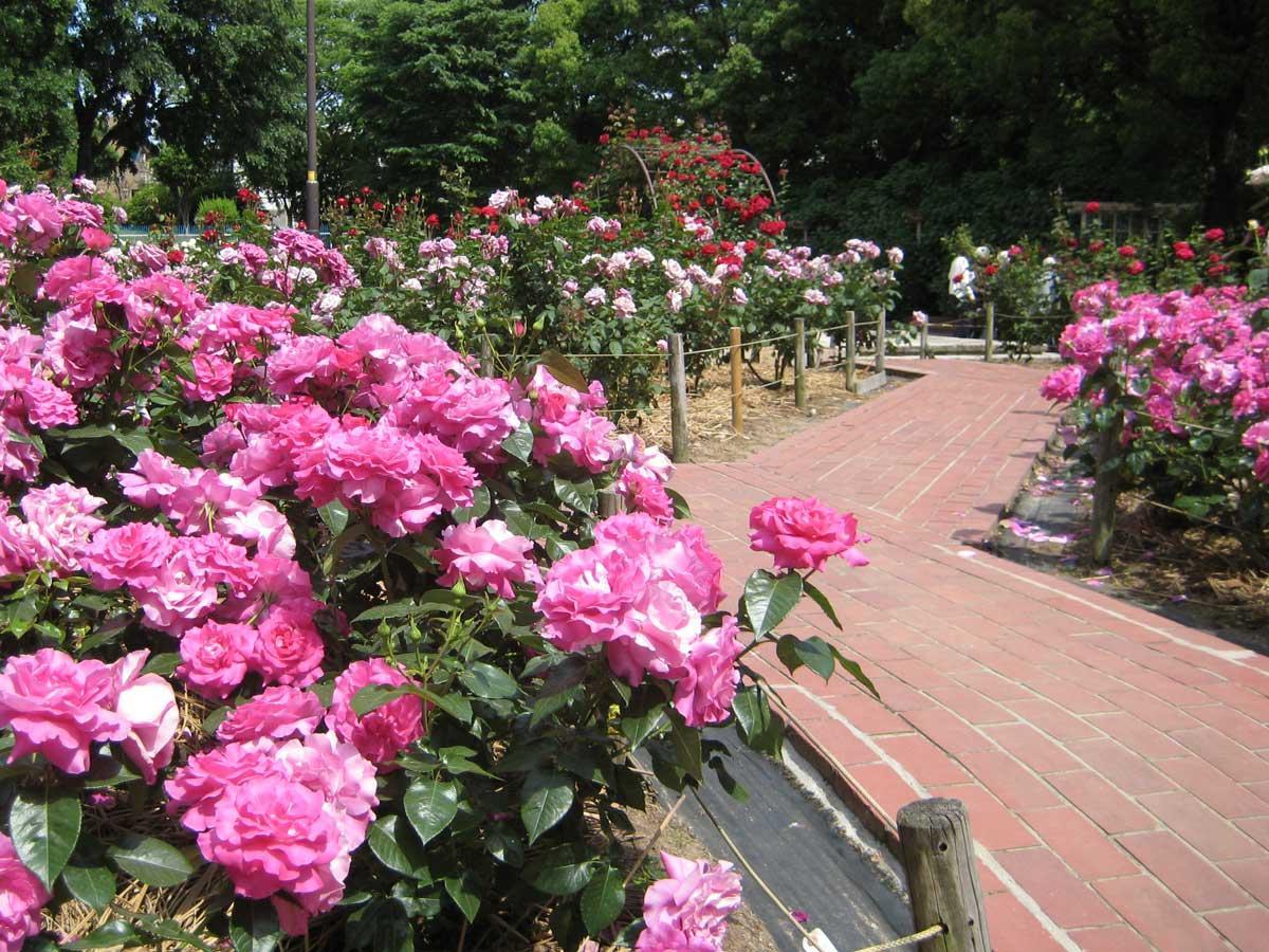 園内にあるバラの回廊