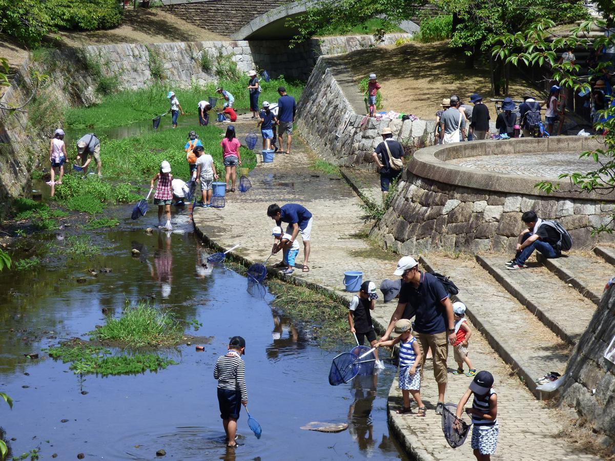公園内を流れる昆陽川で水辺の生き物を探す子どもたち