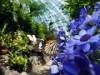 伊丹市昆虫館、明るくなった「チョウ温室」で再開 企画展「危険生物」も