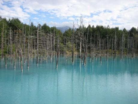 会場となる美瑛にある青い池