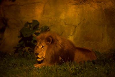恒例となった「夜の動物園」 写真:旭山動物園提供