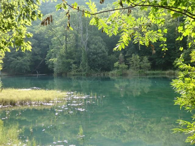 美瑛町の「青い池」を思わせる富良野市鳥沼公園の沼