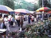 浅草で東京最大級の植木市「お富士さんの植木市と花のフェスティバル」