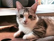 浅草に猫カフェ「モンタ」-生後7カ月の8匹勤務、インテリアにもこだわり