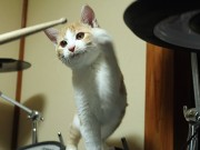 浅草橋で子猫の成長記録写真展 V系ドラマーとの異色コンビで話題に