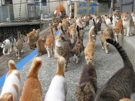 人口16人と猫140匹が暮らす猫の楽園「青島」