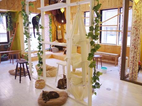譲渡型保護猫カフェ「猫三昧」店内