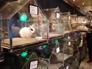 浅草のウサギカフェがリニューアル 飼育環境と消臭対策強化