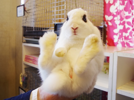 """The Asakusa Rabbit Cafe """"Usanpo"""" has been completely renovated and now features a Bonsai garden and cage-free enclosures"""