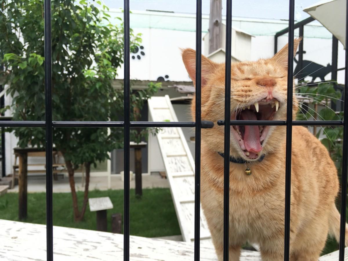 猫の気持ちを最優先にした、猫と直接触れ合うことを目的としないカフェ
