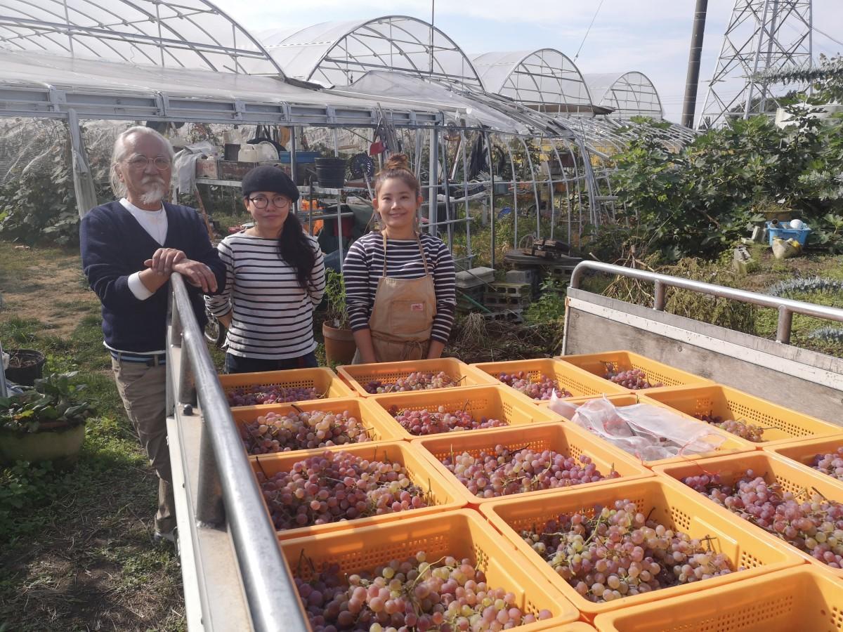 収穫されたブドウと(左から)増子敬公社長、増子春香専務、栽培担当の増子和香さん