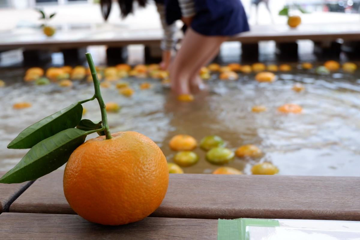 熱海特産ダイダイの足湯を楽しむ観光客ら