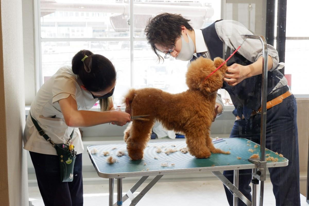 ペットがリラックスできる広い空間で施術を提供する