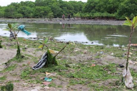 マングローブの森を汚染するビニールのゴミ