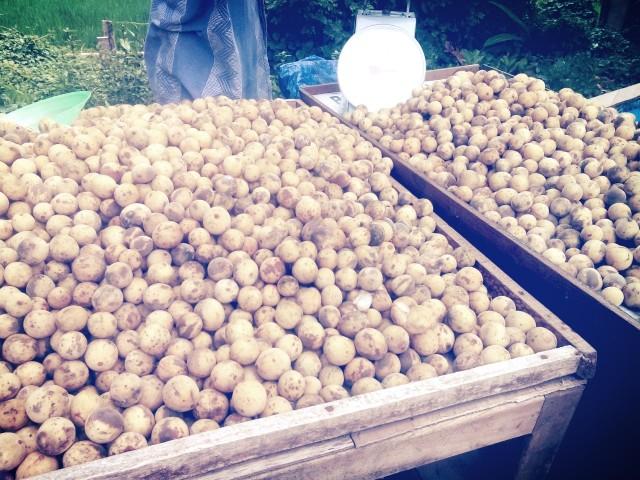 日本では知られていないフルーツ、バリ島の「チェロリン」