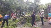 豪雨・強風が続くバリ島で倒木 市民・レンジャーが協力し撤去