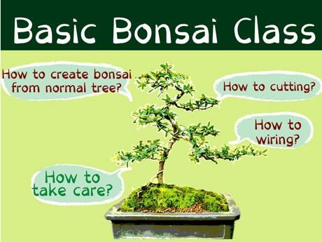 「盆栽初級講座」の告知用ポスター。