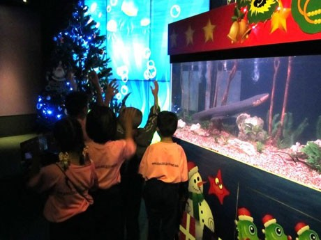 デンキウナギの電気で点灯するクリスマスツリー