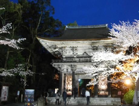 「萬塾」第1回は三井寺で歴史を学ぶ(春の桜ライトアップの様子)