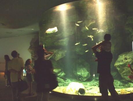 昼は寝ていてほとんど動かないナマズなど夜行性の魚が動いている様子を楽しむ家族連れ(写真提供;琵琶湖博物館)