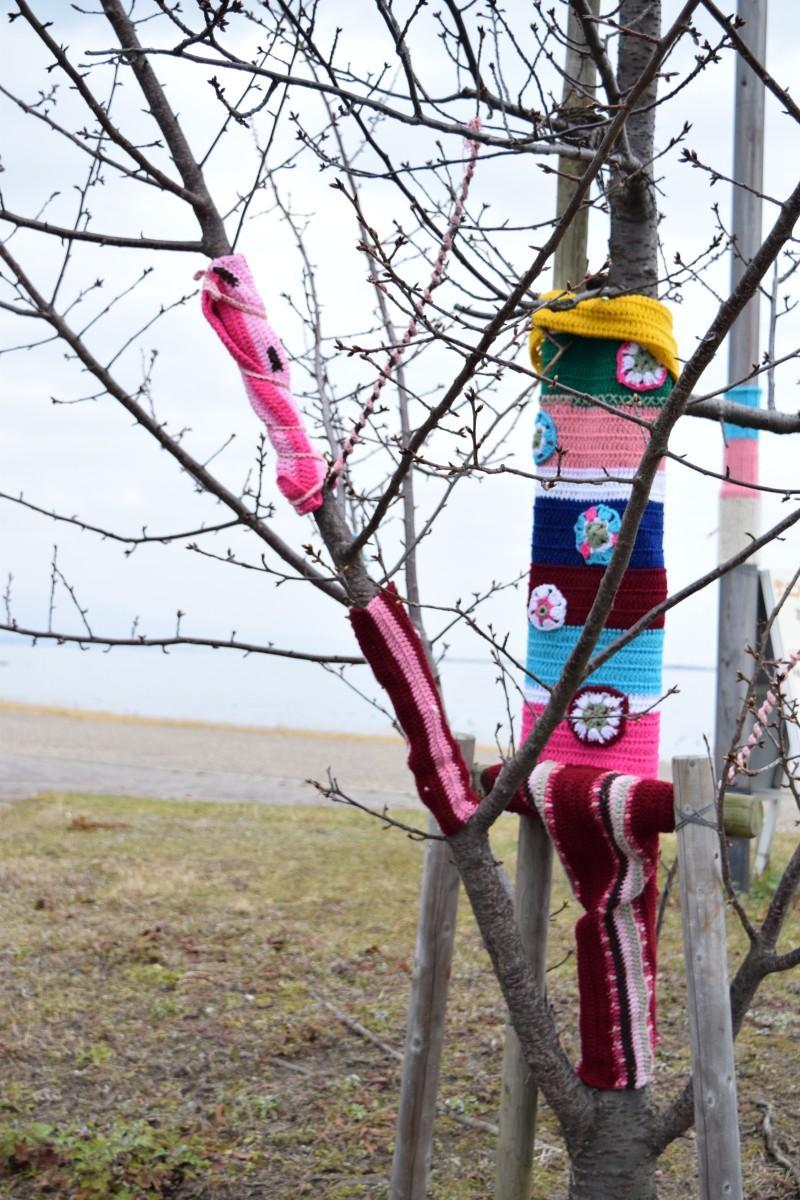 カラフルな毛糸に包まれたカワヅザクラの木