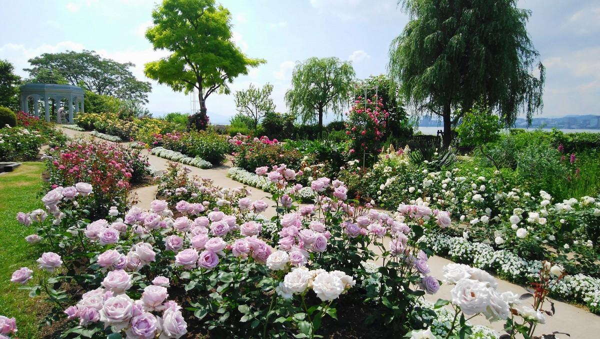 バラと琵琶湖を一望できるイングリッシュガーデン