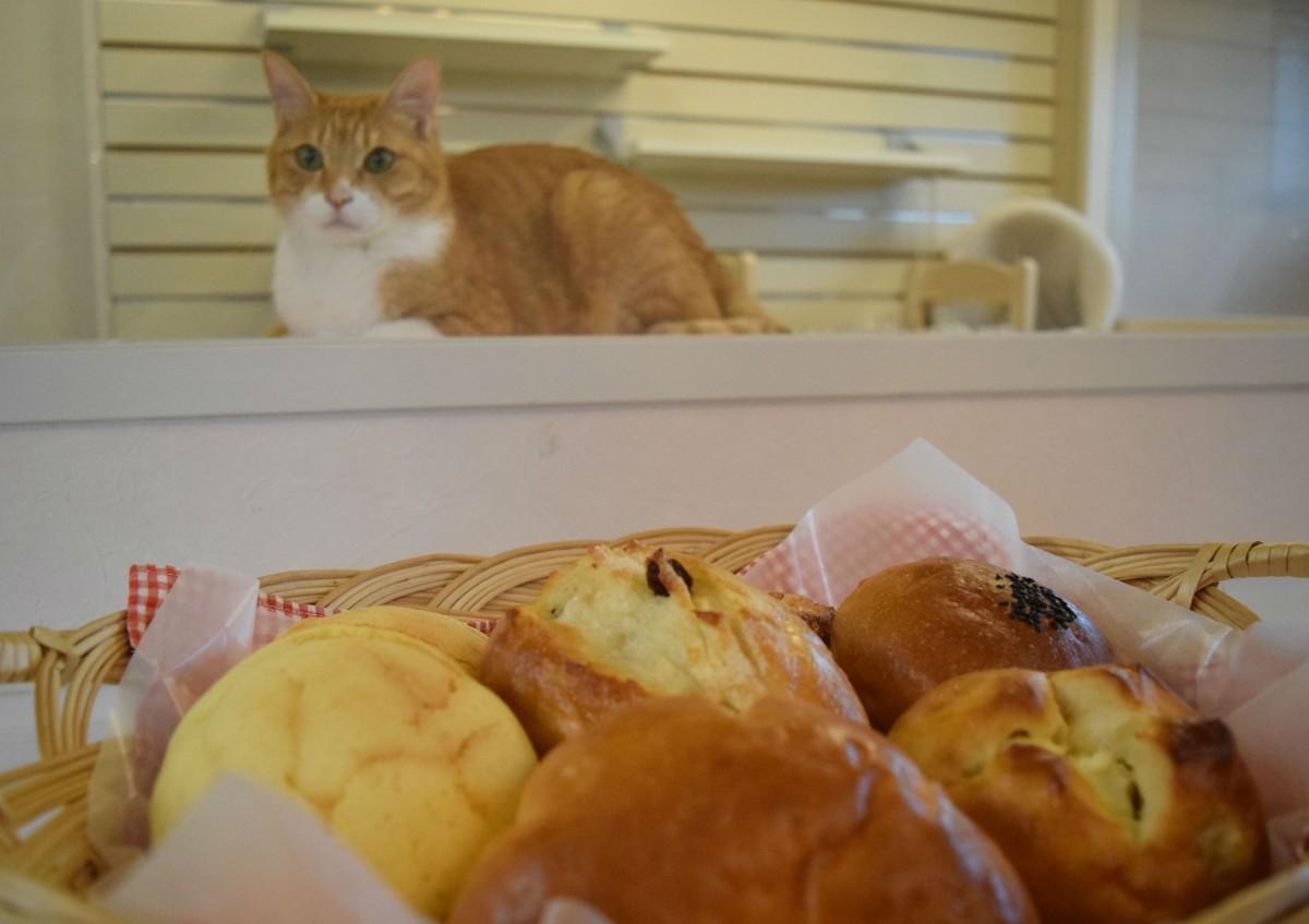 ガラス越しに猫を見ながら、パンを食べることができる
