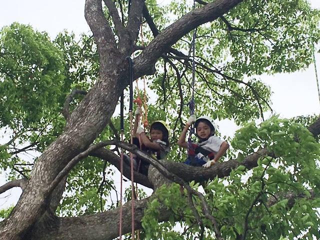 木に登る子どもたち(前回開催の様子)