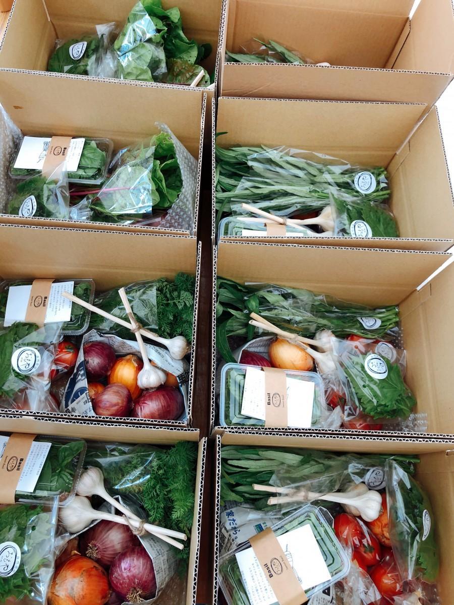 「滋賀めし旬の野菜セット」トマト、にんにく、玉ねぎなど