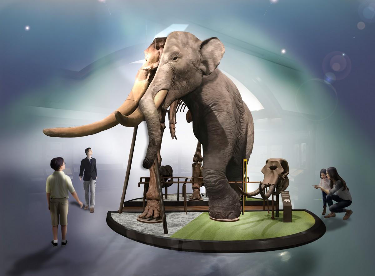 世界初の「半骨半身標本のツダンスキーゾウ」