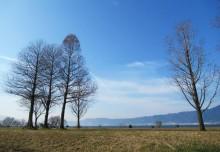 琵琶湖岸でドライブスルーマーケット 「3密を避けて琵琶湖と地元の食を楽しんで」