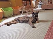 湯島に保護猫カフェ「ネコリパ」 仕事がはかどらない仕事空間も