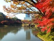 小石川後楽園で紅葉が見頃 480本のモミジが庭園を彩る