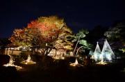 文京・細川家ゆかりの庭園で紅葉ライトアップ 「竹あかり」による演出も