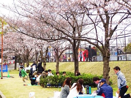 桜の木の下にくつろぐ人々(昨年のJFEさくらまつりの様子)