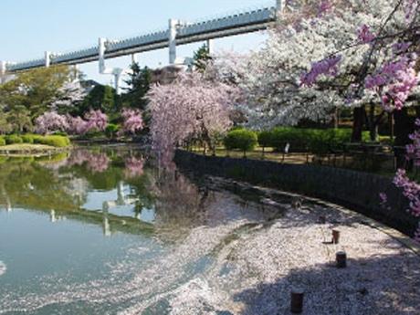 水面に映る桜と花びら