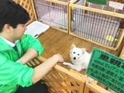 竹堂さんと保護犬の「ニイナ」