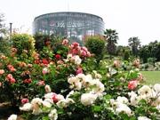 千葉・フラワーミュージアムで「ローズフェア」 バラと草花のハーモニー