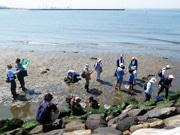 千葉の海辺で自然観察会 希少な鳥、コアジサシが見られる可能性も
