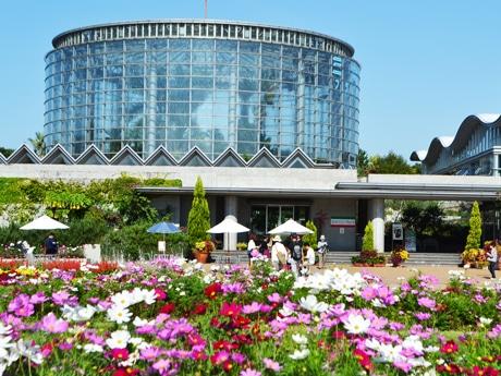 コスモスが咲くフラワーミュージアム