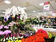 千葉そごうで「フラワーフェスティバル」 千葉県産の約580点の花々が集結