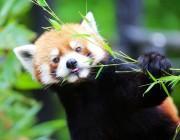 千葉市動物公園で「風太くん生誕15年」写真募集や寄付の協力募る