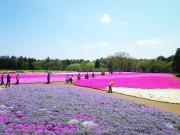 千葉市観光協会が「春のバスツアー」 千葉市の見どころ紹介、イチゴ食べ放題も