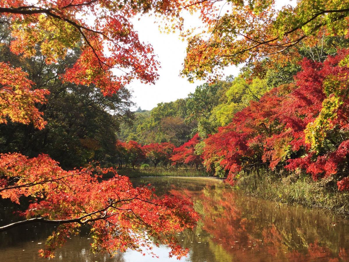 泉自然公園の紅葉風景(11月13日撮影)(写真提供=若葉公園緑地事務所)