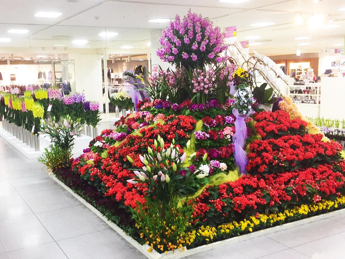 千葉県の生産者が育てた花が並ぶ会場
