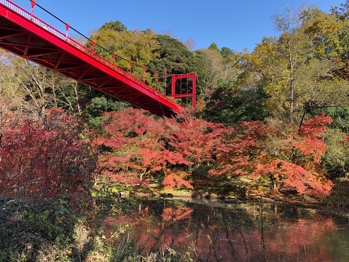 いずみ橋下から眺める紅葉(11月16日撮影)