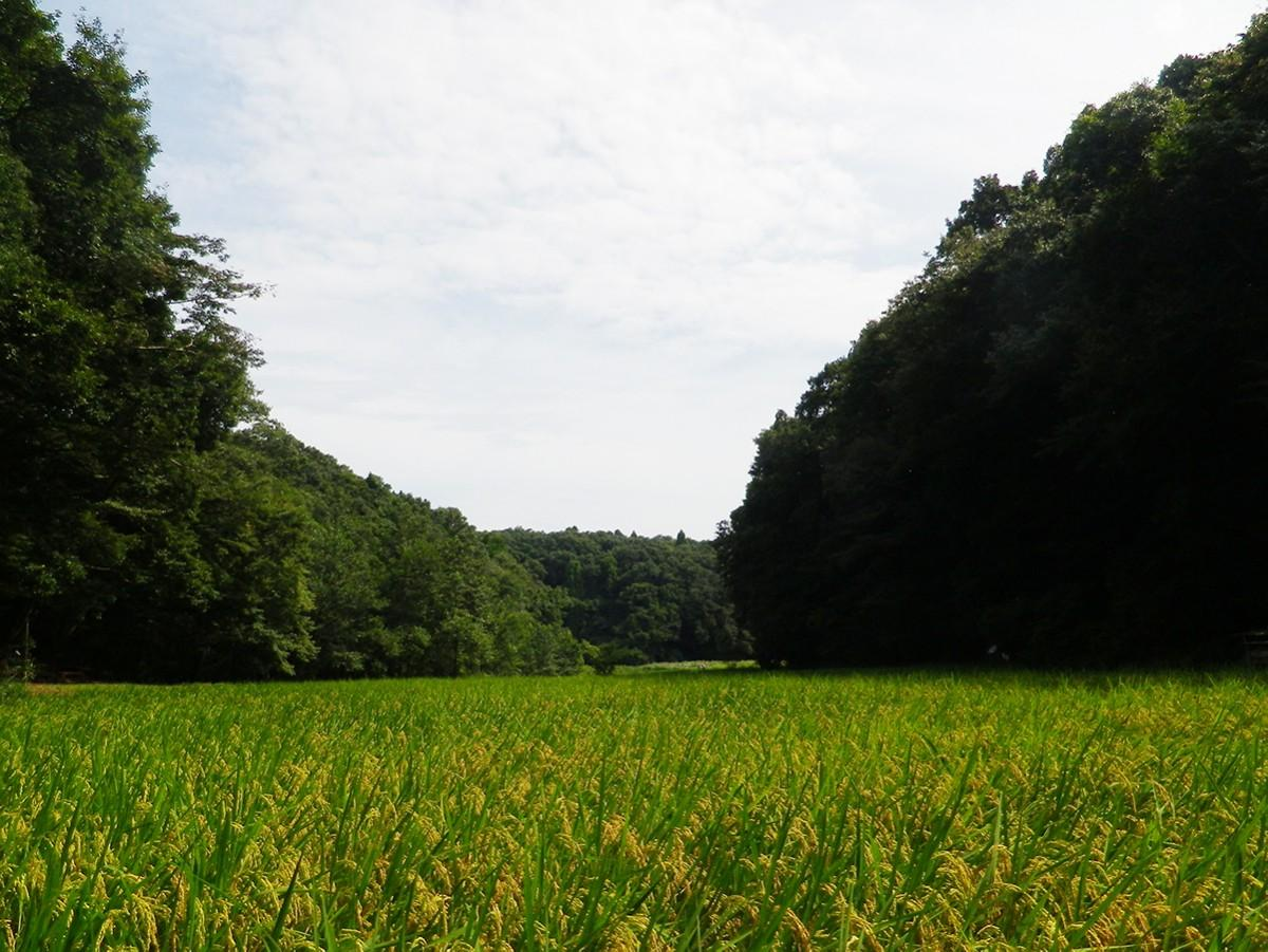 谷津田の風景