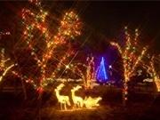 調布の洋風庭園「アンジェ」をクリスマスイルミで演出-開園時間延長も